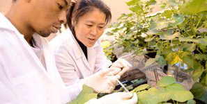 researchers in white coats examining large-leafed plants